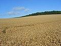 Farmland, Boxford - geograph.org.uk - 925055.jpg