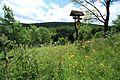 Fichtelbergwiesen im Erzgebirge, Sachsen...2H1A2341WI.jpg