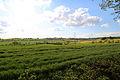 Fields looking west from churchyard, Stapleford Tawney, Essex, England.jpg