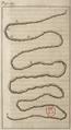 FileAndry - De la génération des vers (1741), planche p. 59.png