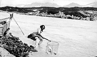 Copper River (Alaska) - A man dip netting on the Copper River, undated photo by John Nathan Cobb (died 1931)