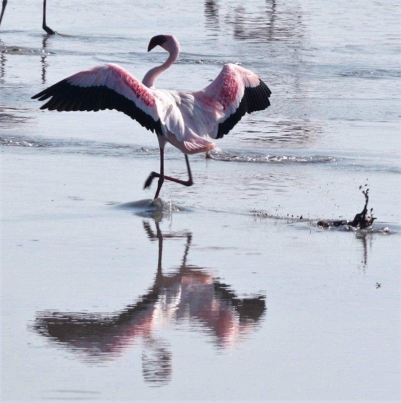 Flamingo landing.jpg