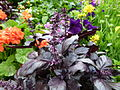 Fleurs et feuilles violettes.jpg