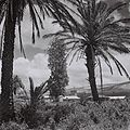 Flickr - Government Press Office (GPO) - Kibbutz Amir.jpg