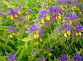 Flickr - Per Ola Wiberg ~ mostly away - wild flowers.jpg