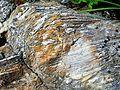 Flickr - brewbooks - metamorphosed banded chert (1).jpg