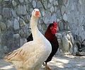 Flickr - lo.tangelini - Polos opuestos, se atraen....jpg