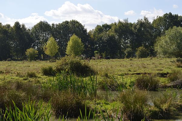 Flitton Moor