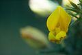 Flor (15580911543).jpg
