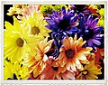 Floral Arrangement - Flickr - pinemikey.jpg