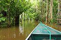 Floresta Alagada II.jpg