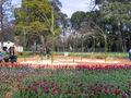 Floriade canberra12.jpg