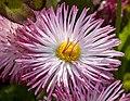 Flower (18174929922).jpg