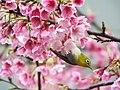 Flower Lover (16558578402).jpg