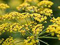 Flowers (14747543339).jpg