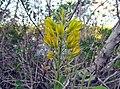 Flowers (6845047048).jpg