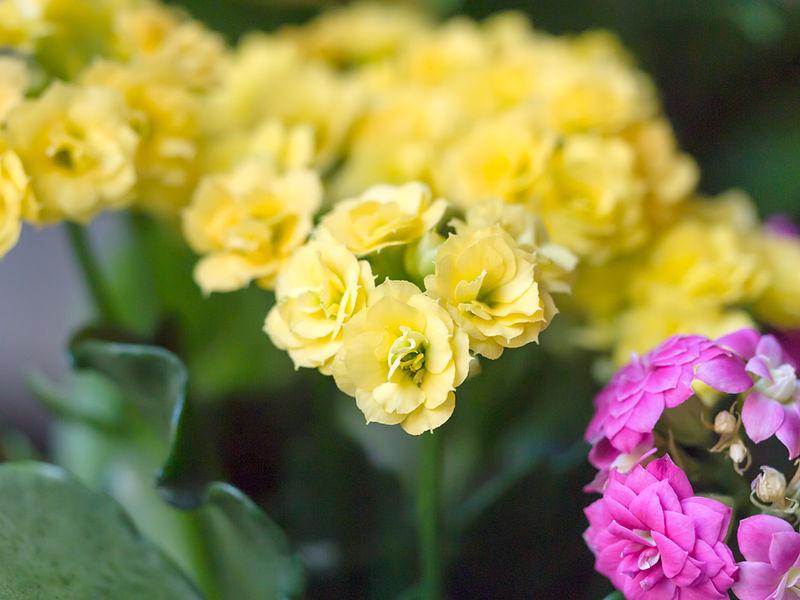 File:Flowers (8726388441).jpg