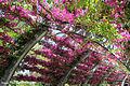 Flowers Path.jpg