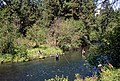 Fly fishing Metolius River, Deschutes National Forest (35941788940).jpg