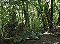 Fly tipping in the woods. Grrrrrr - geograph.org.uk - 508737.jpg
