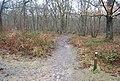 Footpath, Church Woods (2) - geograph.org.uk - 1132502.jpg