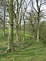 Footpath Through the Trees, Hartsgreen, Shropshire - geograph.org.uk - 401456.jpg