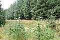 Forest - geograph.org.uk - 259195.jpg