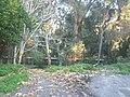 Forest - panoramio (59).jpg