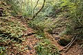 Forest in Mt.Myo 08.jpg