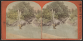 Fountain, Central Park, N.Y, from Robert N. Dennis collection of stereoscopic views.png