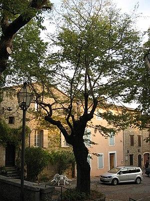 Fox-Amphoux - Image: Fox Amphoux trees, 3