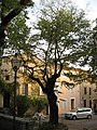 Fox Amphoux trees, 3.jpg