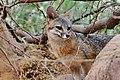 Foxy Lady (35778157215).jpg
