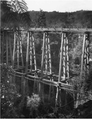 Frank Ward's double-deck viaduct of the Taringamotu Tramway (Ted Lattery collection, ref 17957).png