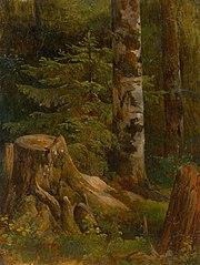 Coniferous Woods Interior