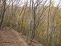 Fujiwaracho Yamaguchi, Inabe, Mie Prefecture 511-0524, Japan - panoramio (4).jpg