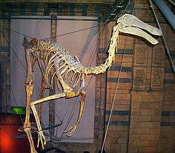 Utstilt skellett hos Natural History Museum, London