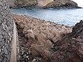 Garachico, Santa Cruz de Tenerife, Spain - panoramio (24).jpg