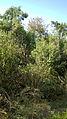 Garden Way - Wall - trees - streamlet - 17 Shahrivar st - Nishapur 23.JPG