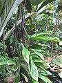 Gardenology-IMG 7999 hunt10aug.jpg