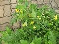 Gardenology.org-IMG 7957 qsbg11mar.jpg
