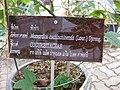 Gardenology.org-IMG 8005 qsbg11mar.jpg