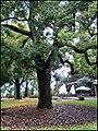 Gazzada - Parco di villa Cagnola - Complesso monumentale del XVIII secolo con parco collinare - L'albero secolare - Park Villa Cagnola - Monumental complex of the eighteenth century with hillside park - panoramio.jpg