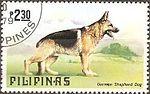 German-Shepherd-Canis-lupus-familiaris Philippines 1979.jpg