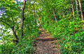 Gfp-wisconsin-wyalusing-state-park-forest-path.jpg