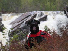 Giant schnauzer in front of waterfall.jpg