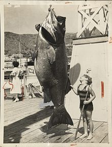 Giant sea bass.jpg