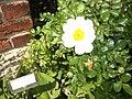 Giardino botanico di Brera (Milan) 194.jpg