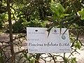 Giardino botanico di Brera (Milan) 323.jpg