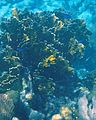 Glover's Reef 2-15 (33332918545).jpg